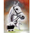 Image of: A Study of Desert Orchid Head Portrait